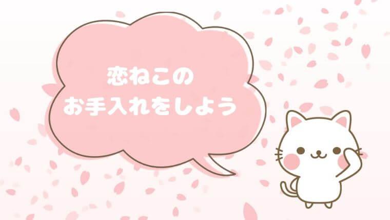 桜の恋猫 お手入れ方法